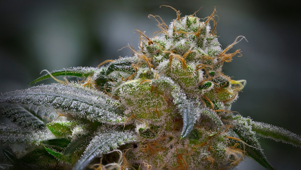 cannabinoids guide