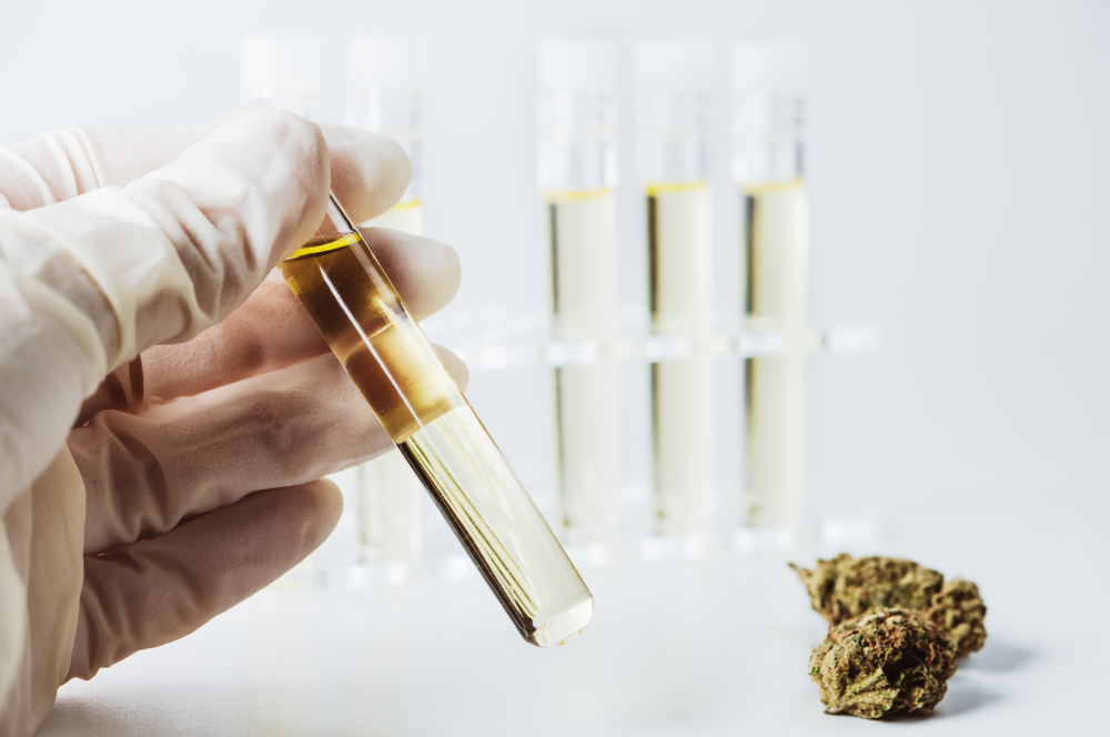 how to use cannabis oil guide