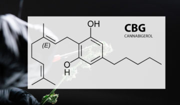 CBG – What Is CBG & Why You Need It